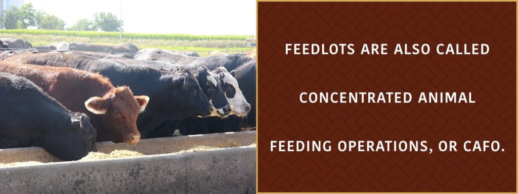 feedlots are also called concetrated animal feeding operations or CAFO